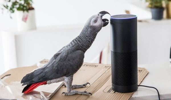PARROT USES AMAZON ALEXA TO SHOP WHILE HIS OWNER IS AWAY!
