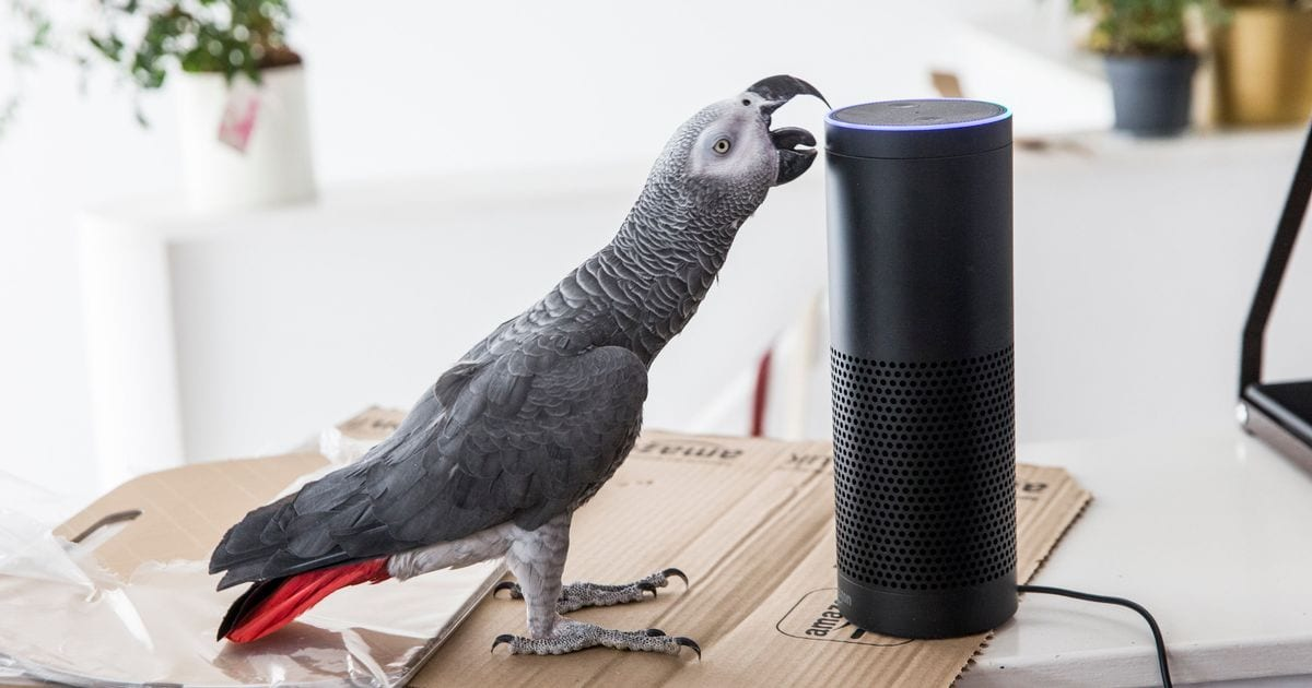 PARROT USES AMAZON ALEXA TO SHOP WHILE HIS OWNER IS AWAY! - 89 1